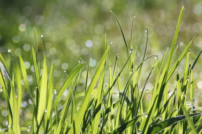 Rodzaje trawników a wybór nasion