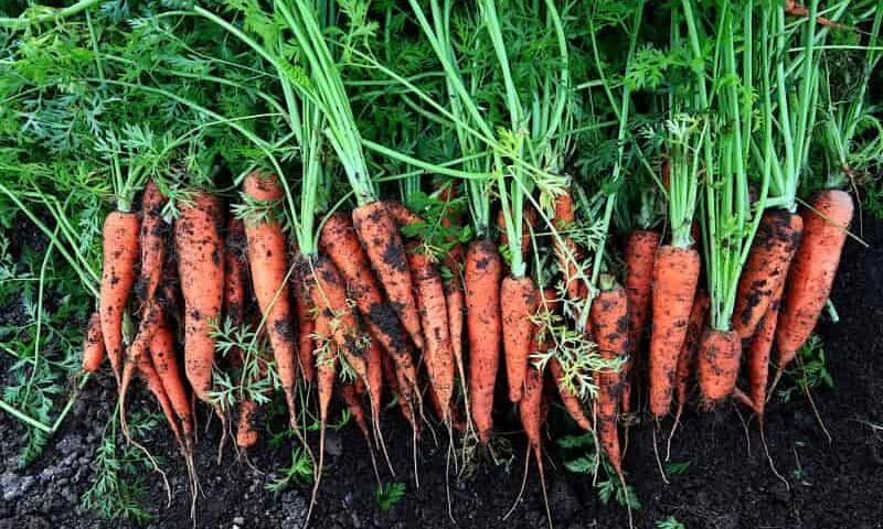 Kopcowanie warzyw krok po kroku